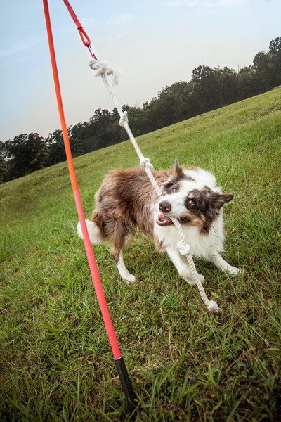 Yard Toys For Dogs : Tether tug outside backyard tugging toy for dogs
